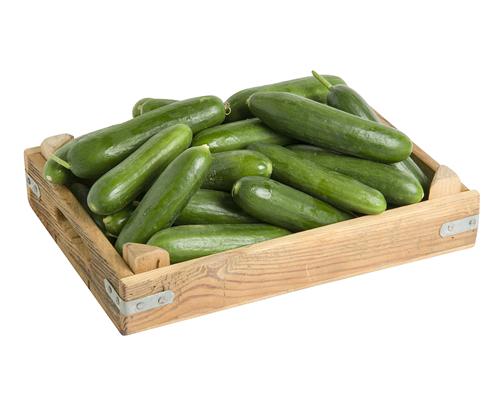 Salatalık Tohumu