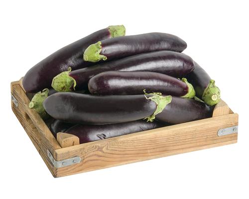Patlıcan Tohumu